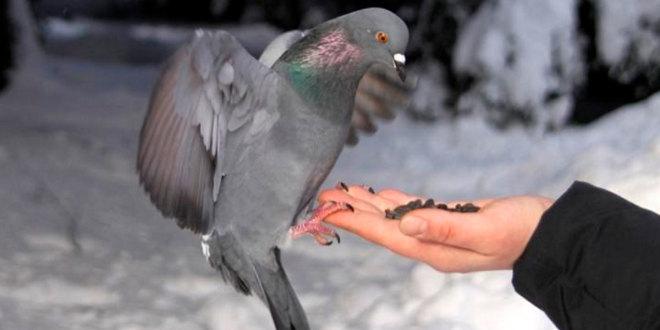Спасём птиц